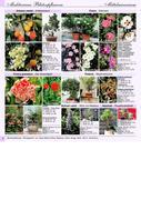 mediterrane pflanzen 2008 2009 von flora toskana. Black Bedroom Furniture Sets. Home Design Ideas