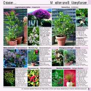 pflanzen in mediterrane pflanzen 2006 von flora toskana. Black Bedroom Furniture Sets. Home Design Ideas