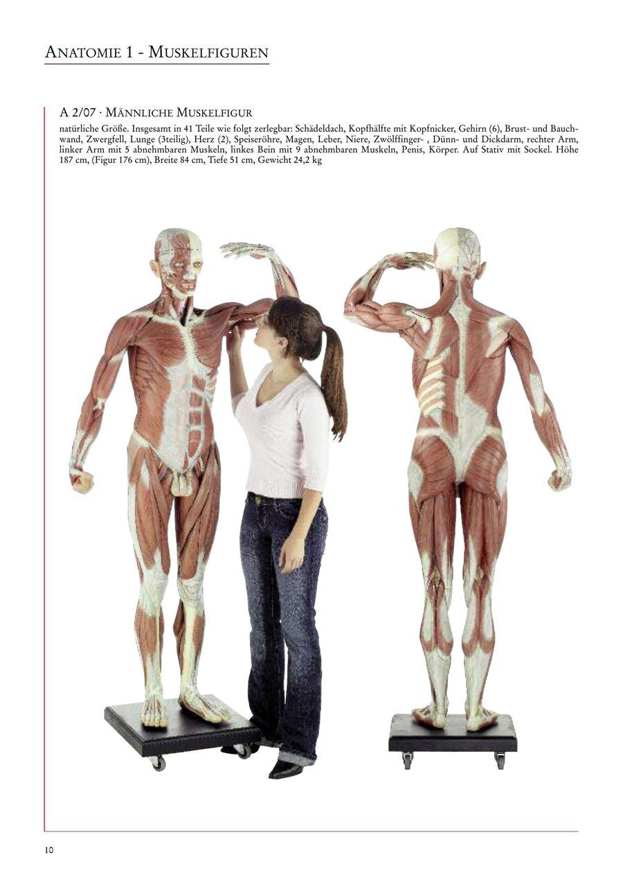Tolle Anatomie Der Brust Und Bauch Ideen - Anatomie Ideen - finotti.info