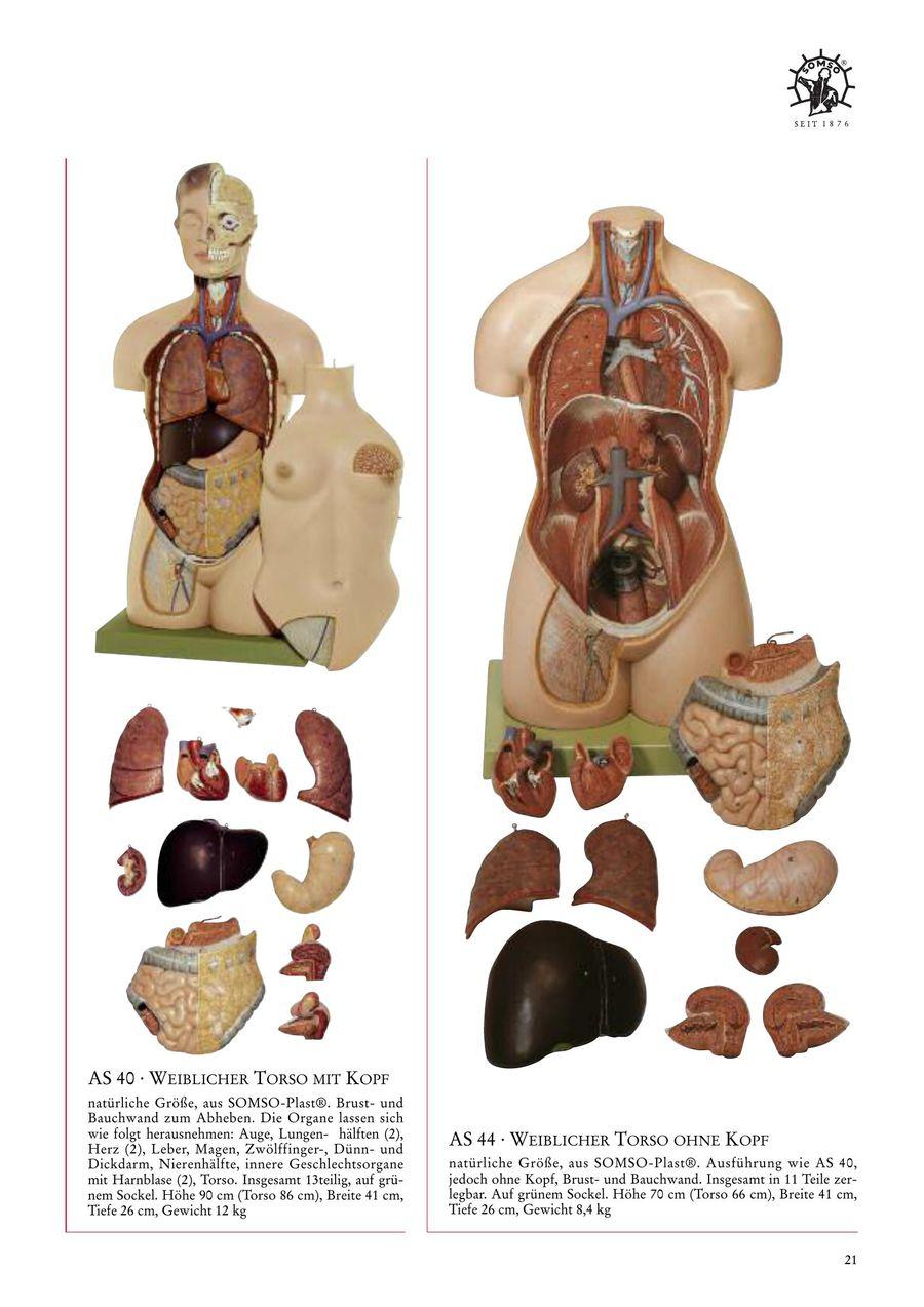 Groß Bild Der Inneren Organe Weiblich Galerie - Anatomie Ideen ...