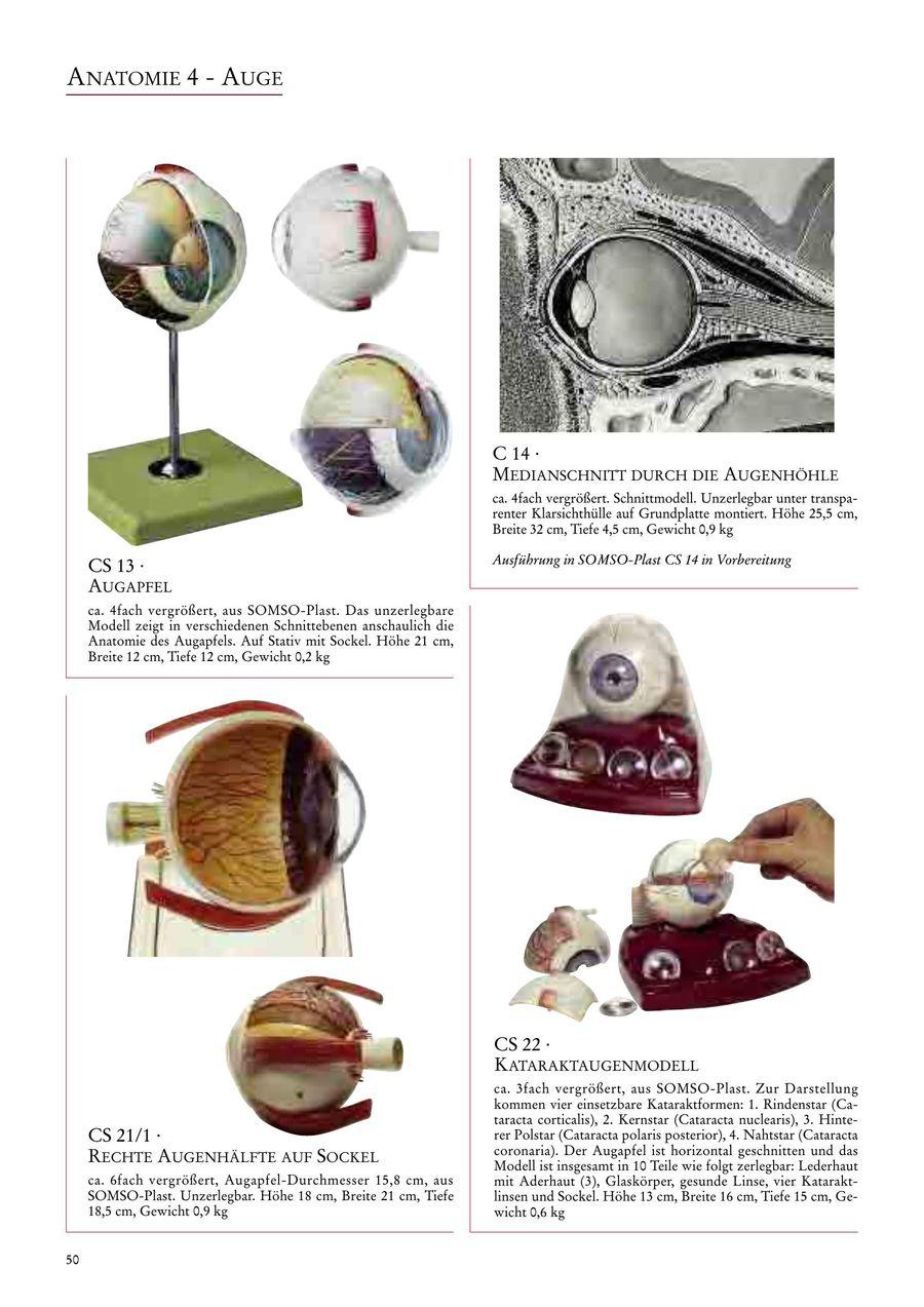 Seite 52 von SOMSO | Anatomie 2017