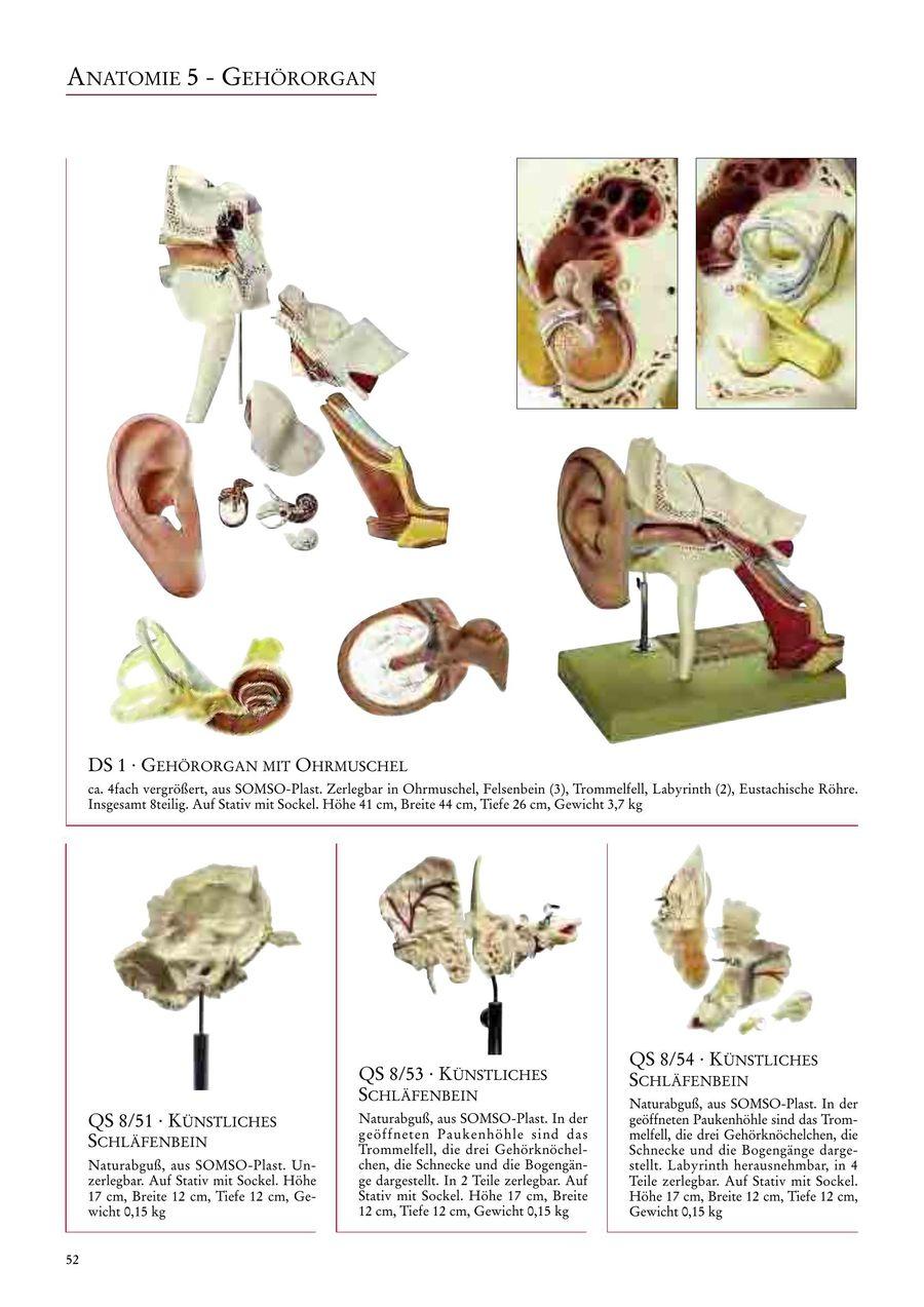 Ziemlich Eustachische Röhre Anatomie Galerie - Anatomie Ideen ...