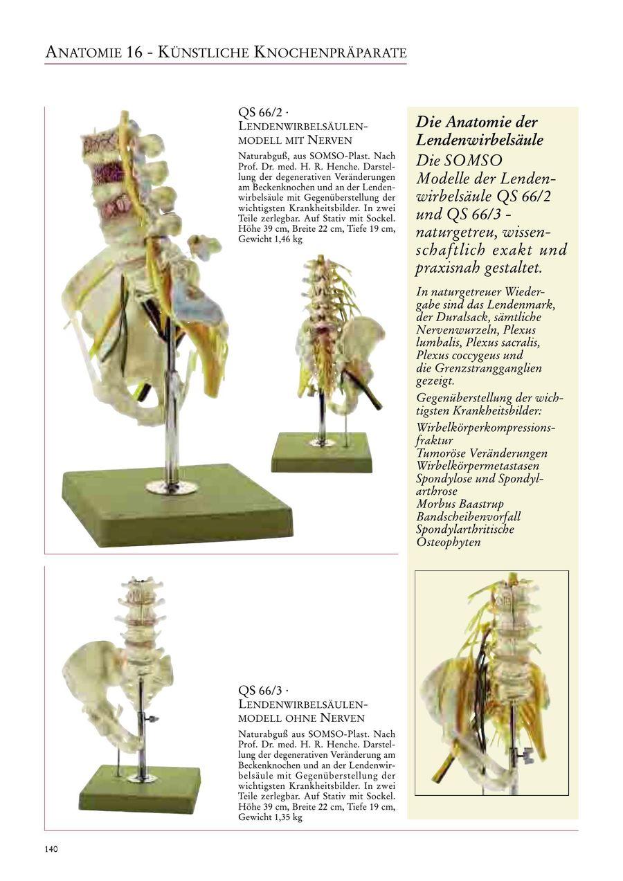 Seite 141 von SOMSO | Anatomie 2017